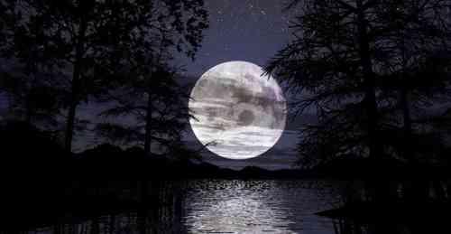 Al chiaro di luna - Il giardino al chiaro di luna ...